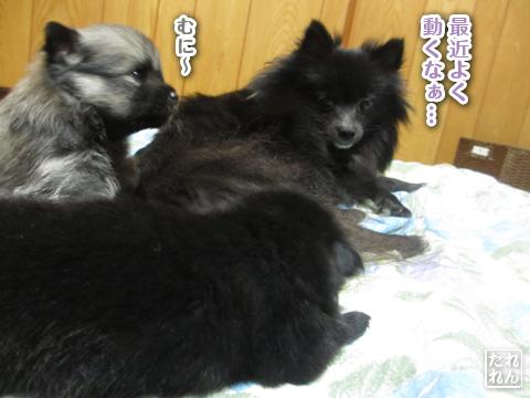 20120925_赤子たち4