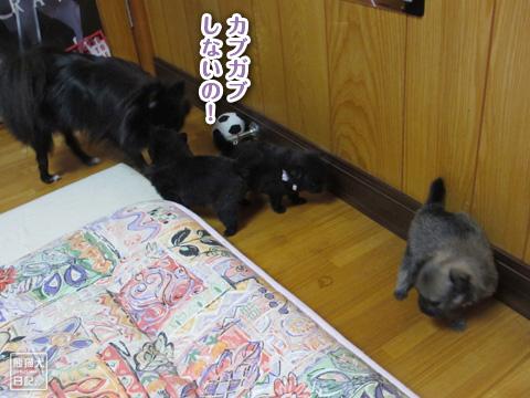 20120927_赤子たち4