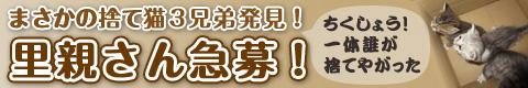 20121014_里親募集!