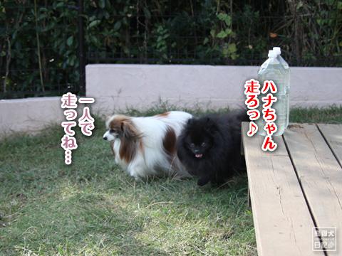 20121024_片田舎のドッグカフェ6