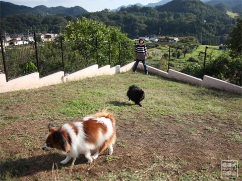 20121024_片田舎のドッグカフェ5