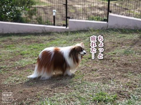 20121024_片田舎のドッグカフェ4