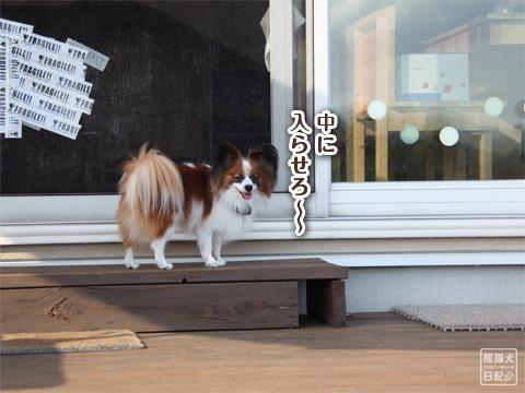 20121024_片田舎のドッグカフェ2