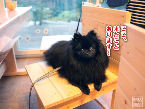 20121024_片田舎のドッグカフェ1