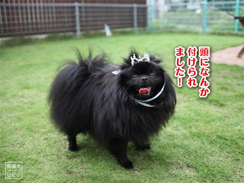 20121208_こじんまり6
