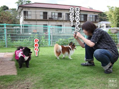 20121208_こじんまり4