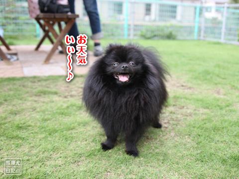 20121208_こじんまり7