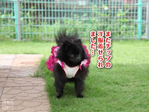 20121208_こじんまり3