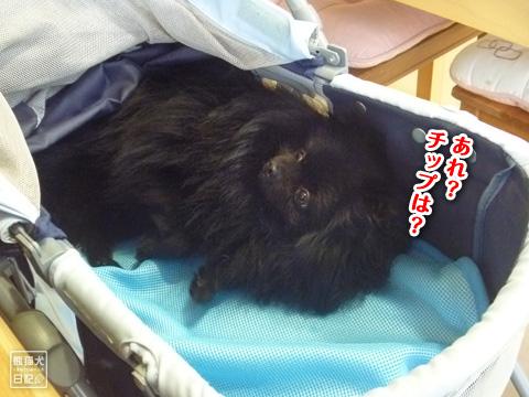 20121208_こじんまり8