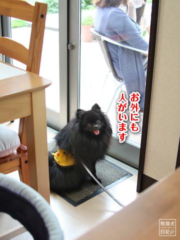 20121208_こじんまり5
