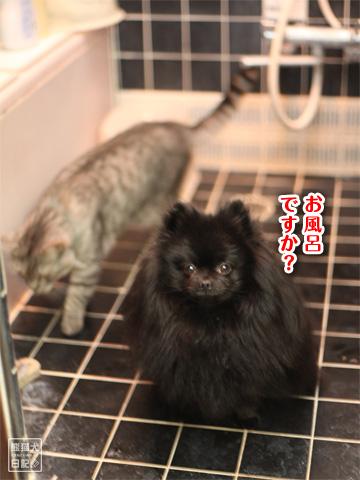 20121216_お風呂1