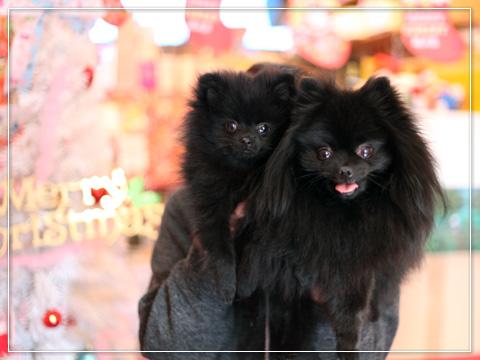 20121220_真熊&志熊6