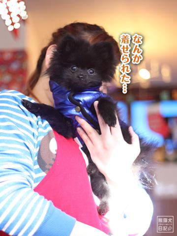 20121220_真熊&志熊2