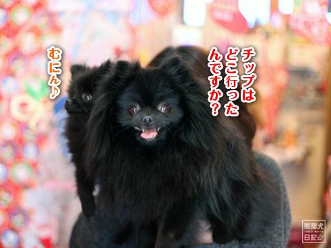 20121220_真熊&志熊7