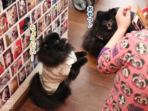 20130304_ひな祭りオフ会3