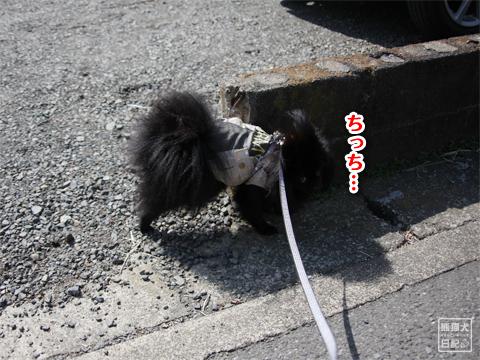 20130311_土曜日3
