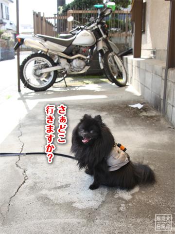 20130312_お出掛け…1