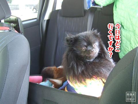 20130317_お出掛け2