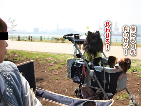 20130319_お台場BBQ4