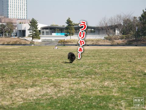 20130321_お台場BBQ4