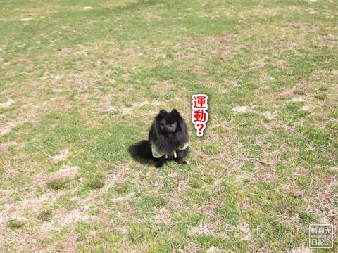 20130321_お台場BBQ1