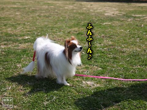 20130321_お台場BBQ10