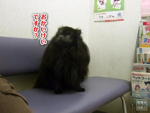 20130322_抜糸10