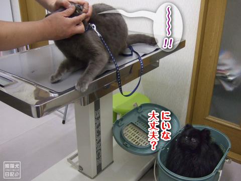 20130322_抜糸7
