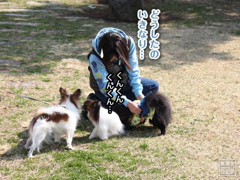 20130323_真熊の出張6