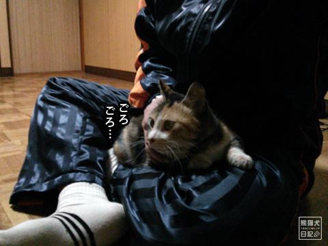 20130325_三毛猫騒動5