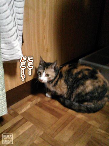 20130325_三毛猫騒動3