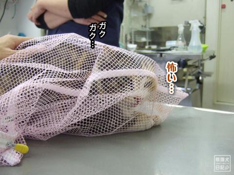 20130325_三毛猫騒動10