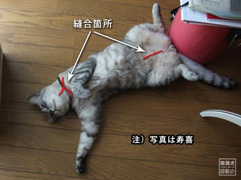 20130326_三毛猫ララバイ2