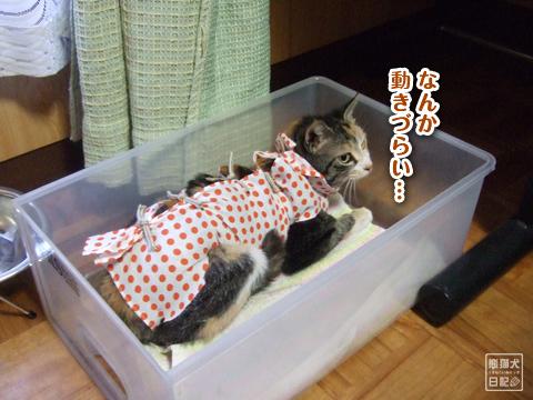 20130326_三毛猫ララバイ8