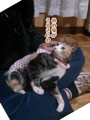 20130327_三毛猫の話4