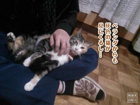 20130327_三毛猫の話5