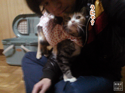 20130327_三毛猫の話2