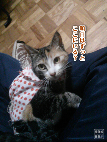 20130327_三毛猫の話8