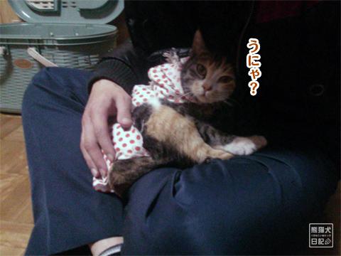 20130327_三毛猫の話7