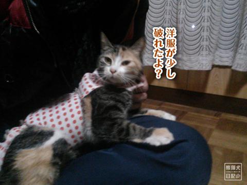20130327_三毛猫の話6