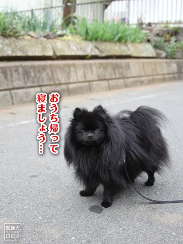 20130426_真熊2