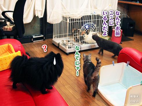 20130527_稚葉トレーニング2