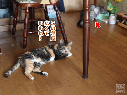 20130710_稚葉2