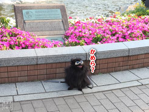 20130716_グラサン犬3