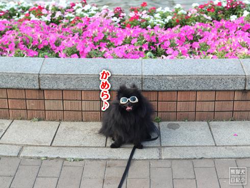 20130716_グラサン犬5