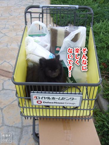 20130719_真熊8