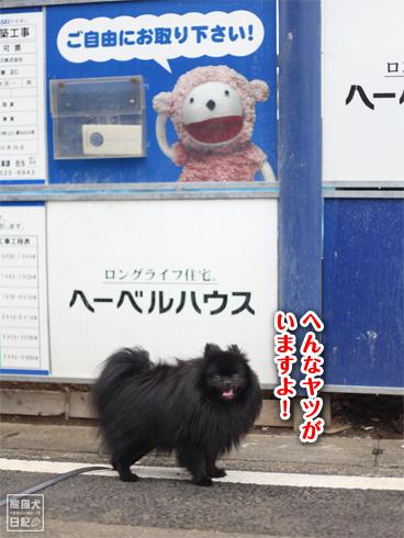 20130721_朝の散歩5