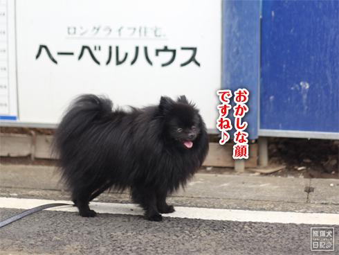 20130721_朝の散歩6