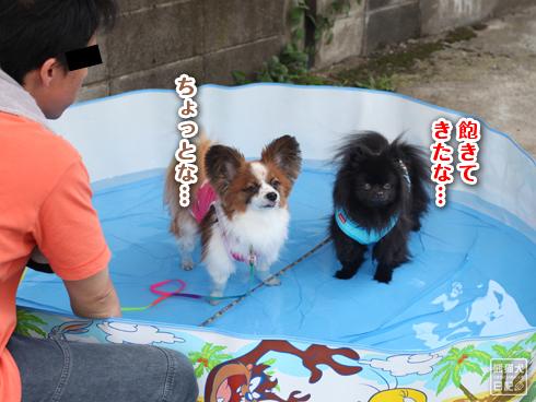 20130725_犬プール3