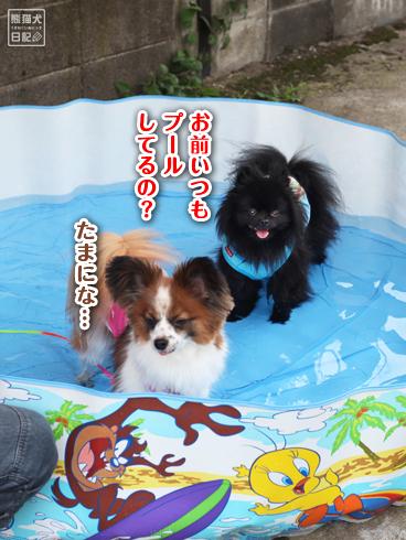 20130725_犬プール2